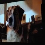 1080p LED vaizdo projektorius Vivicine, Android 10.0 photo review
