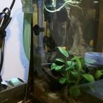 Išorinis akvariumo filtras 220V 50hz photo review